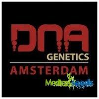 Gelato Sorbet DNA Genetics | MedicalSeeds cz
